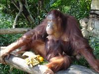 シンガポール動物園/イメージ